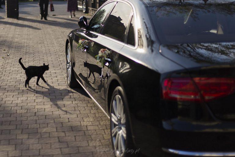 czarny kot przy limuzynie PP 0206